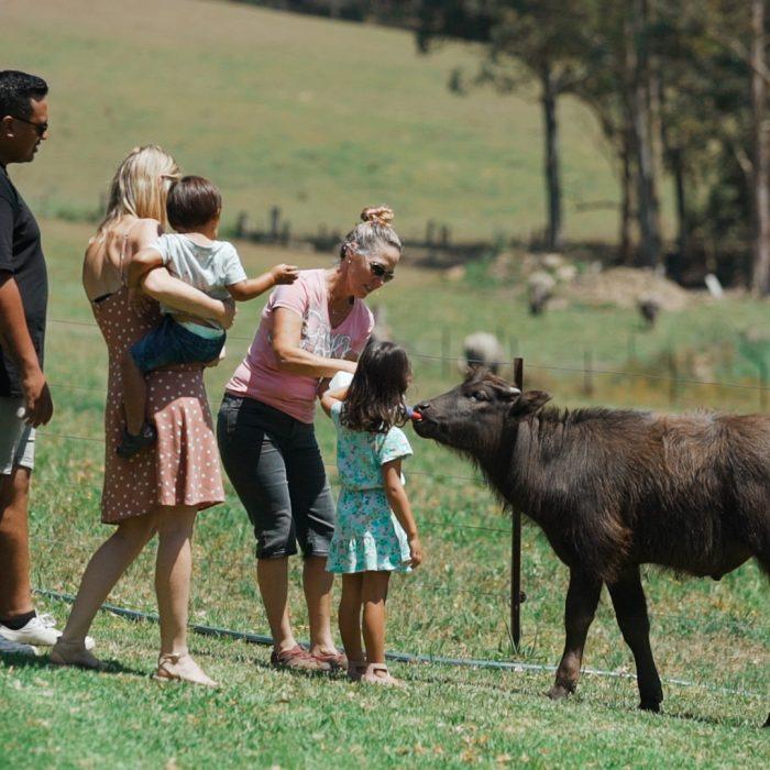 Eungai Buffalo Farm